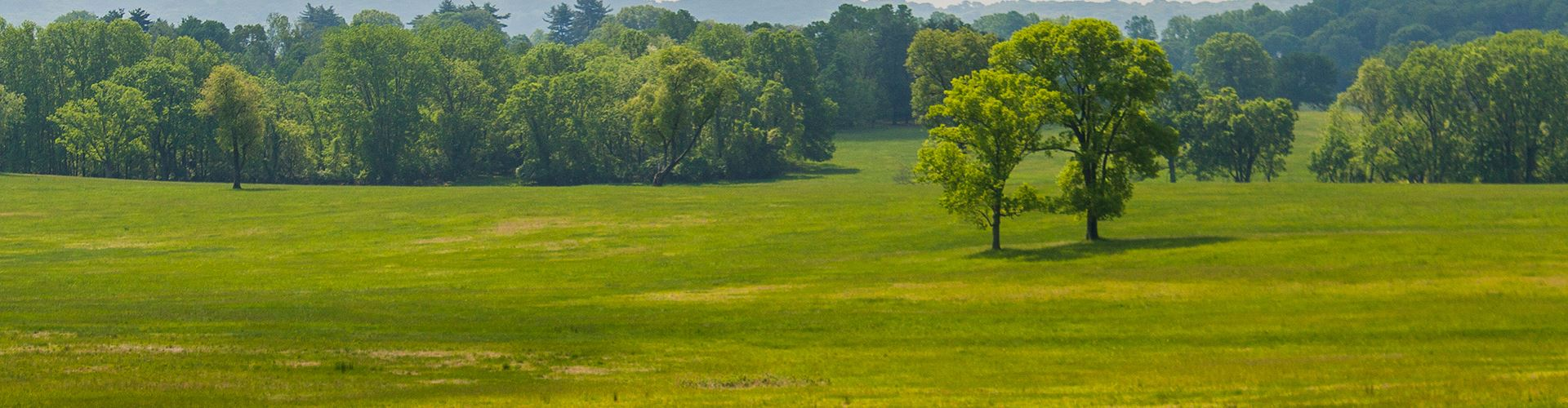 Green Pennsylvania field with trees