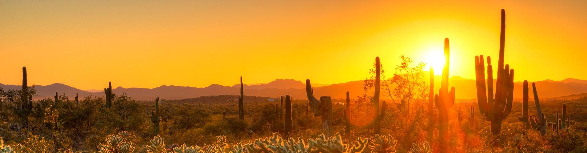 Sunset in the Arizona desert with saguaro cacti
